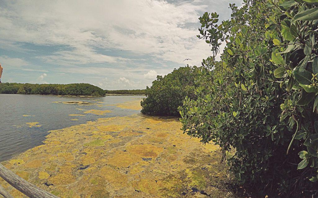 Laguna Pajarera Centro en Isla Contoy, Riviera Maya.