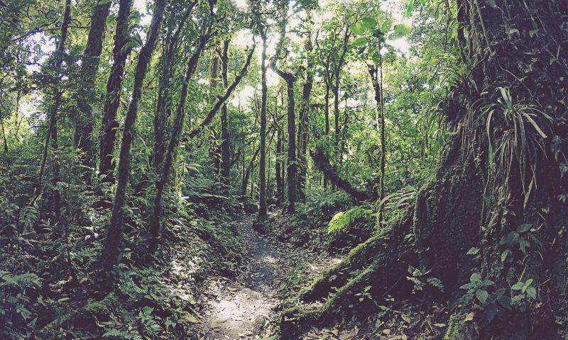 Reserva de Bosque Nuboso Santa Elena. Monteverde. Costa Rica