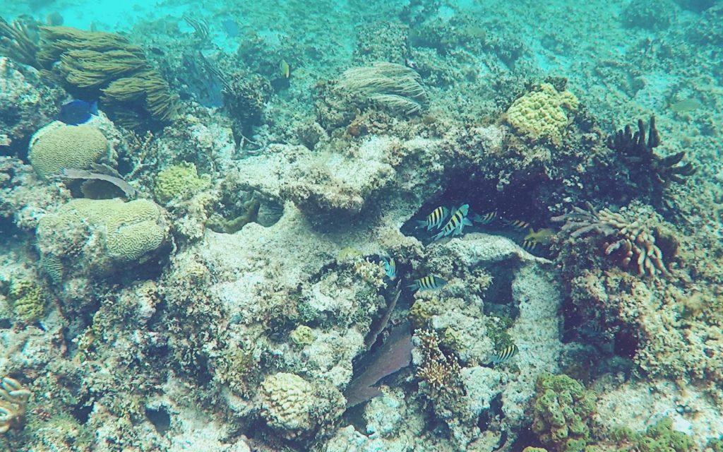 Snorkel cerca de Isla Contoy, Riviera Maya.