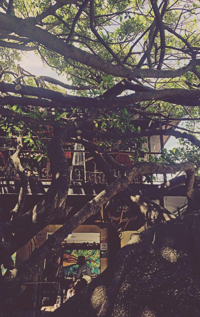 Restaurante Tree House. Monteverde, Costa Rica