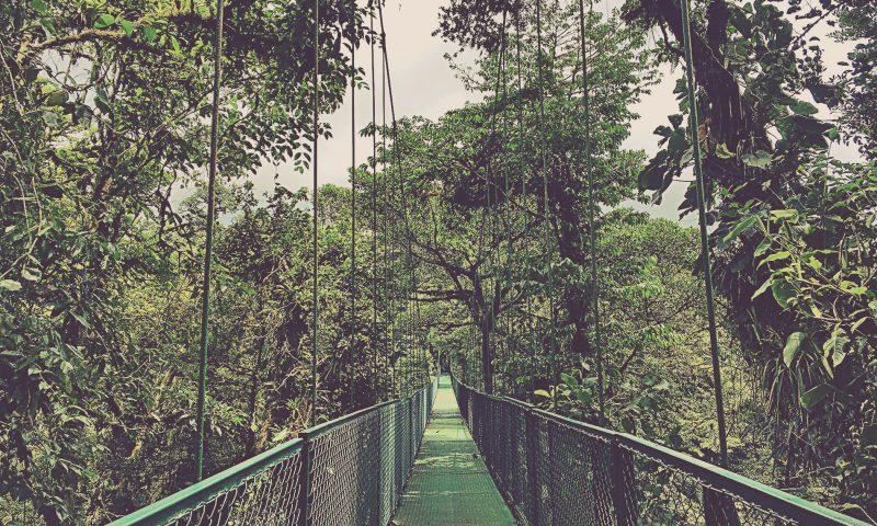 Puentes Colgantes en Selvatura Park. Monteverde, Costa Rica.