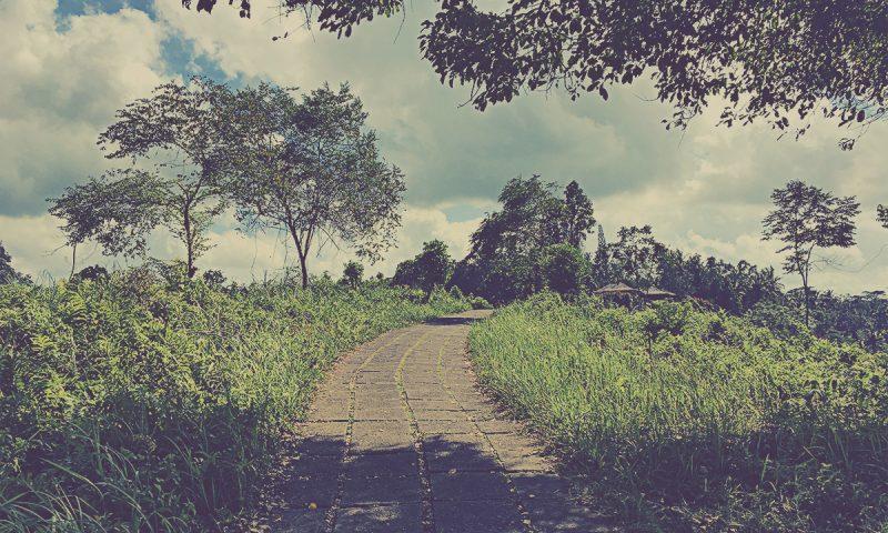 Campuhan Ridge Walk. Ubud, Indonesia