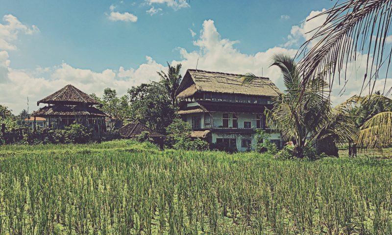 Kajeng Rice Fields. Ubud (Bali, Indonesia)