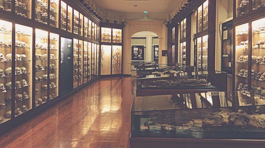 Cráneos y momias en el Museo Canario