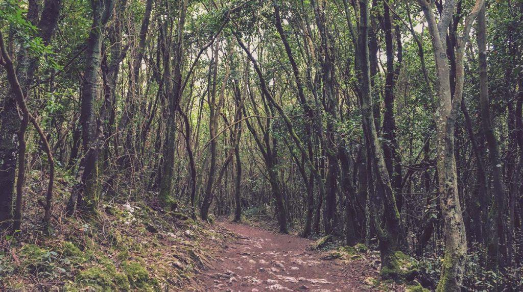 Ruta-Ecosistema-de-Bosque-Monte-Buciero