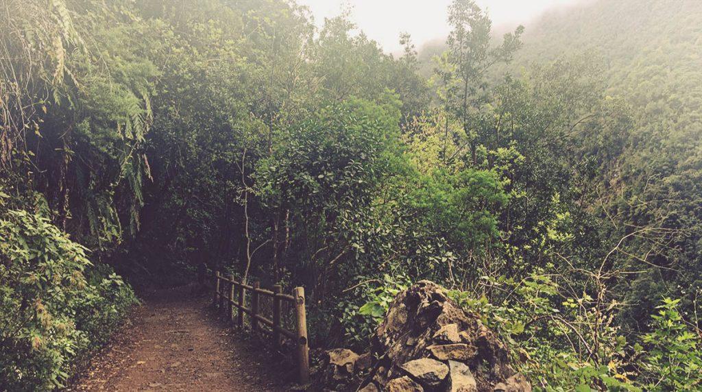 Sendero-Mirador-Espigón-Atravesado-laurisilva-La-Palma